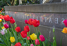 spu sign with colorful tulips